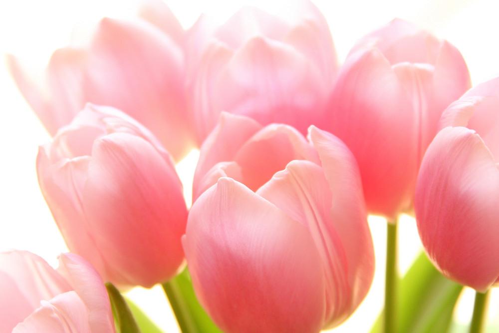 Pink von bilderlinie