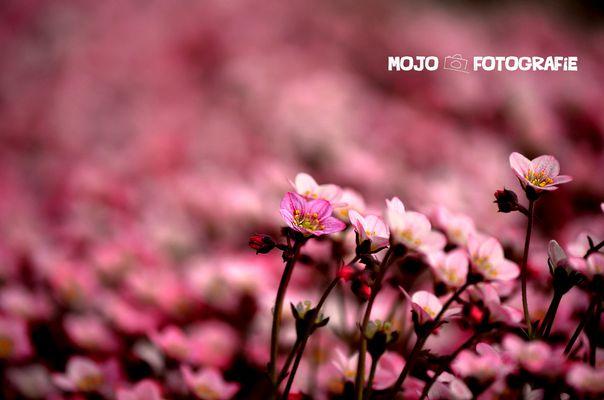 Pink <3