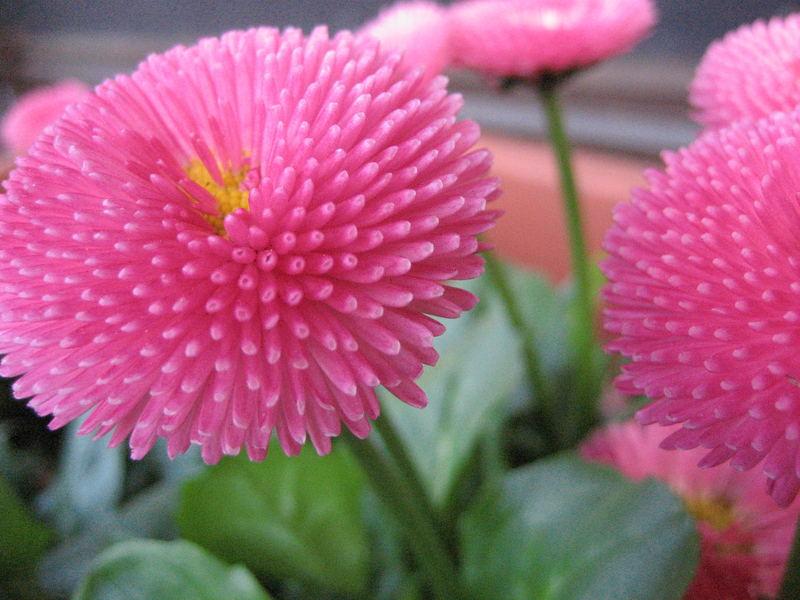 *pink*