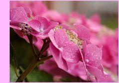 """pink beauty"""
