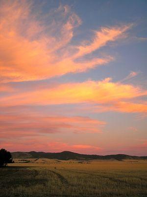 Pink Clouds Ballet