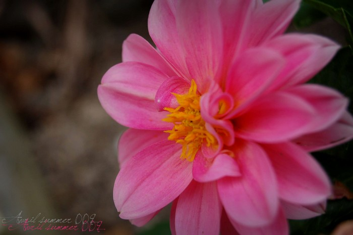 Pink flower; Pretty & romantic