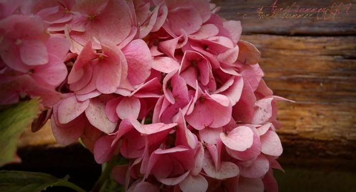Pink flower; secret & misterious