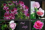 Pink -Ladys