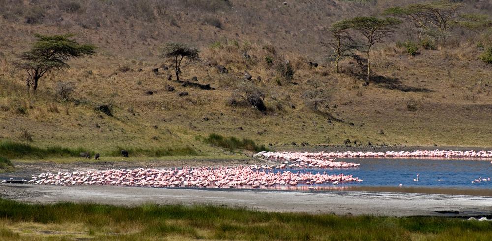 Pink Lake Wonder