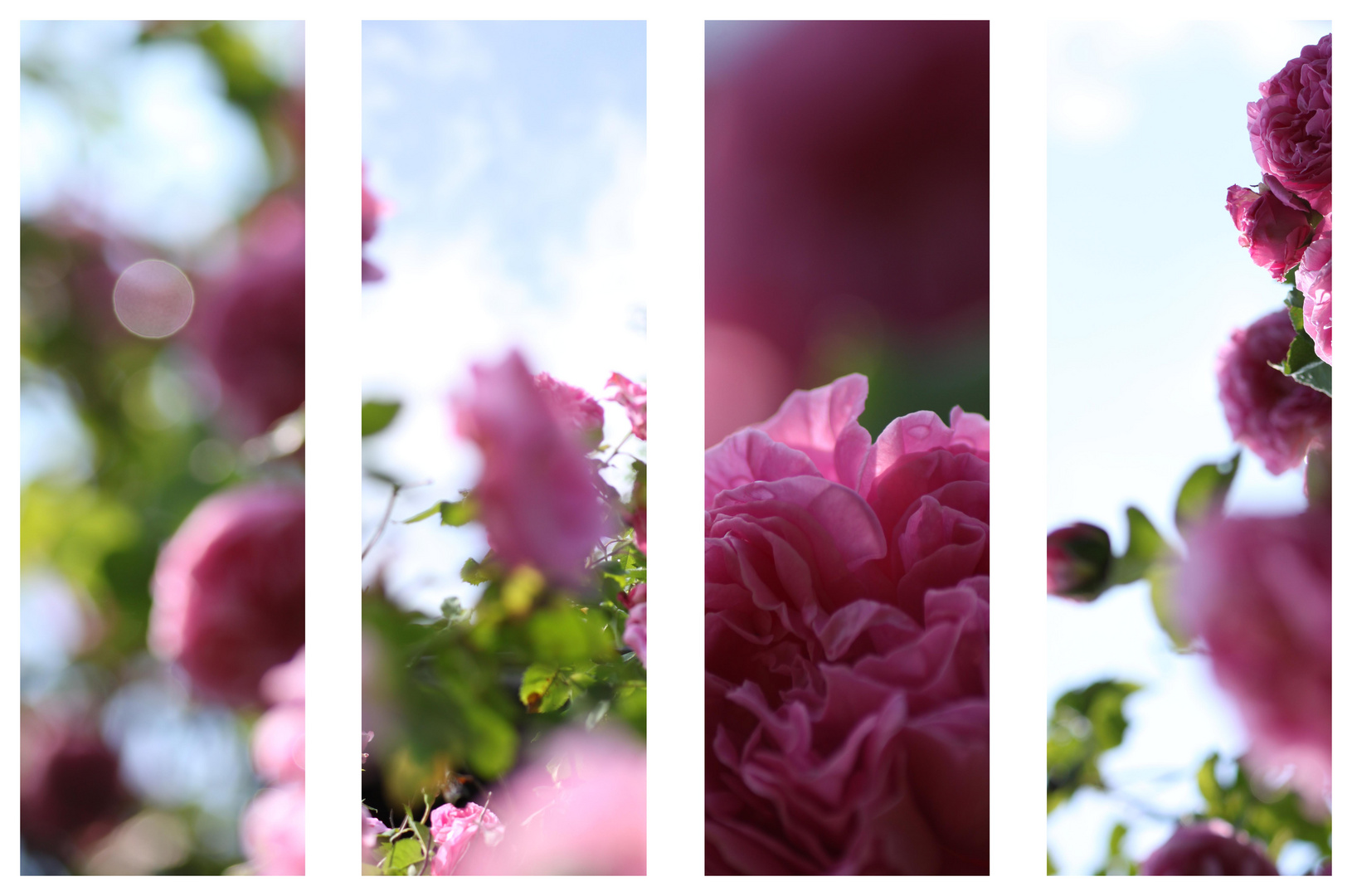 pink 'n' green