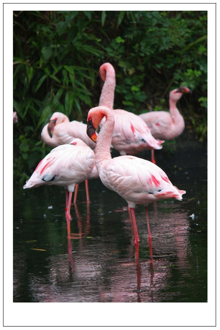 Pink Rain