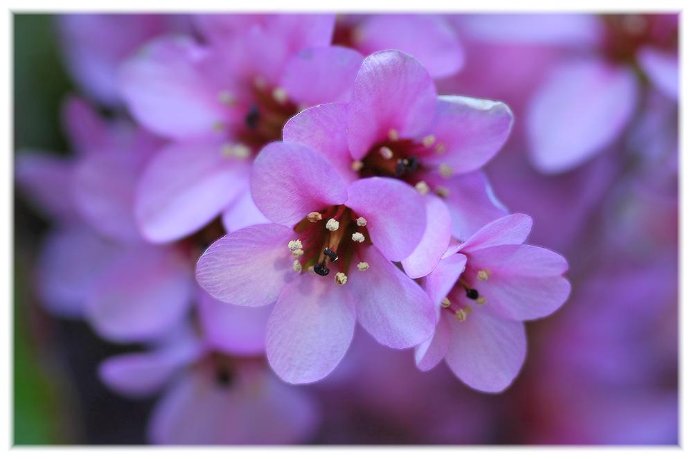 Pink-Sunday