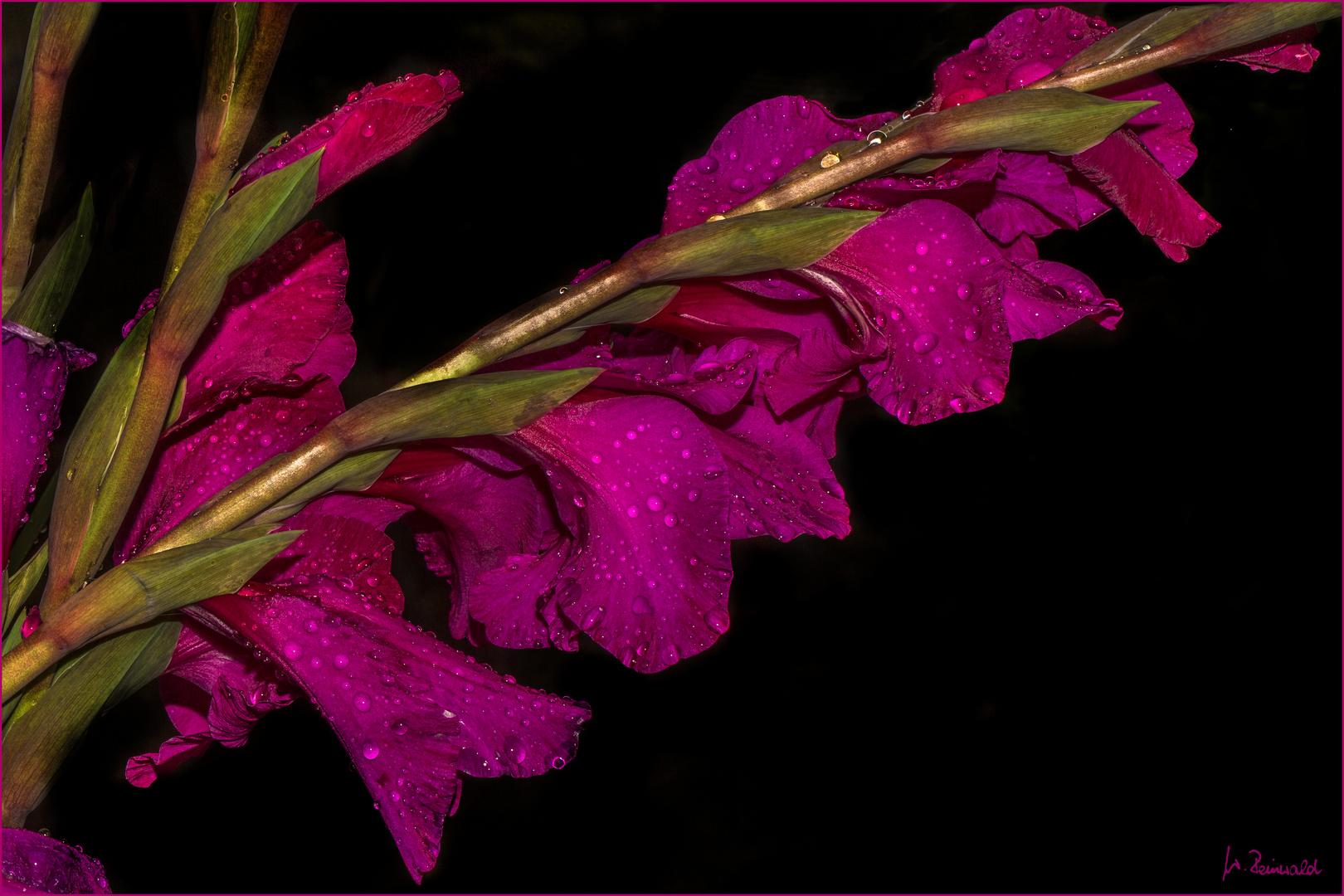 pink und nass