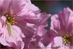 Pink Versteck