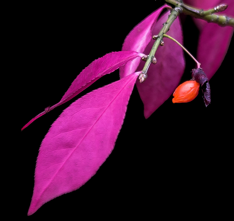 Pinkes Blatt...