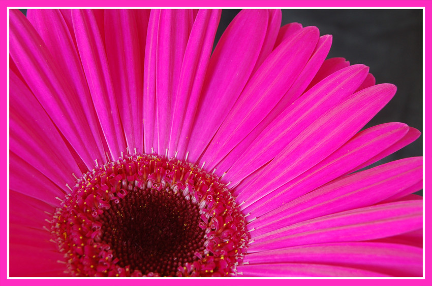 __:Pinkes Wunder:__