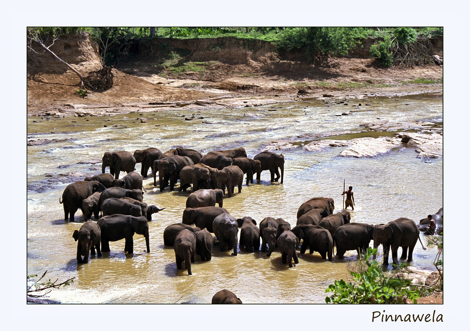 Pinnawela, das Elefantenwaisenhaus