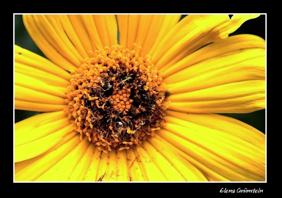 Pintada en amarillo
