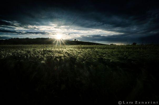 pioggia di luce sul campo di grano