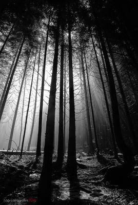 pioggia nel bosco