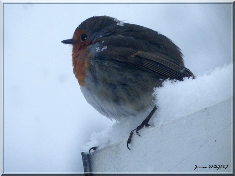piou-piou sous la neige