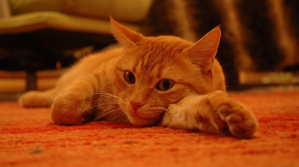Pipo entspannt