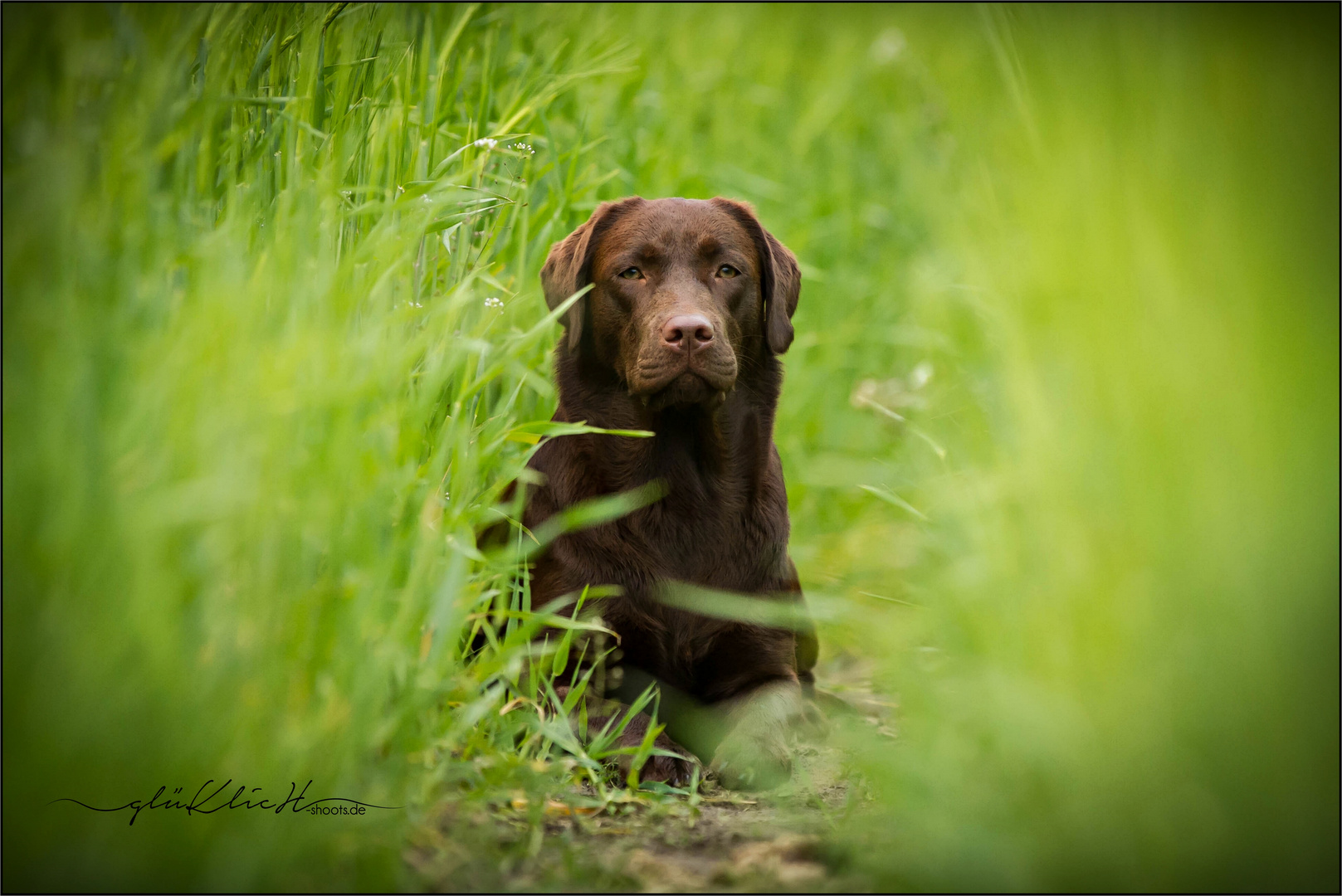 Pippa im Feld