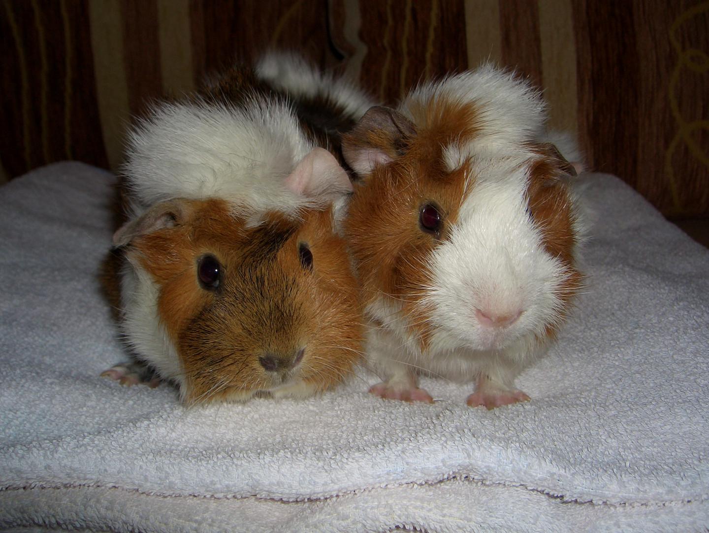 Pippi und Rudi