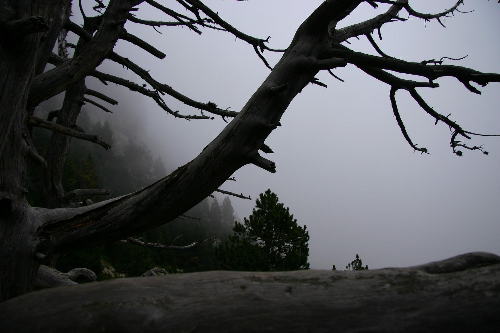 Pirineos. Camino de Ulldeter