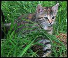 Pirsch im feuchten Gras