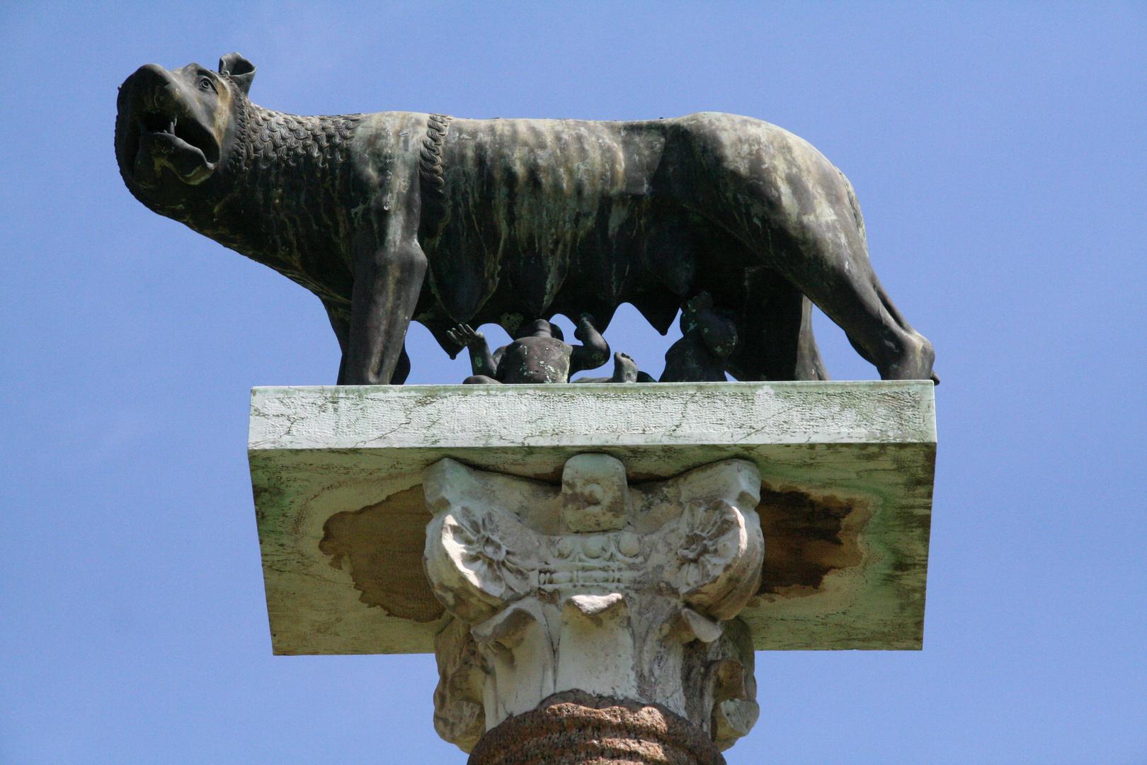 Pisa -die kapitolinische Wölfin in PIsa-