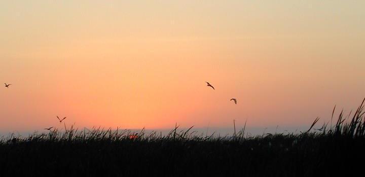 Pisco, atardecer sobre la playa con pájaros