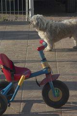Pistacchio e il triciclo