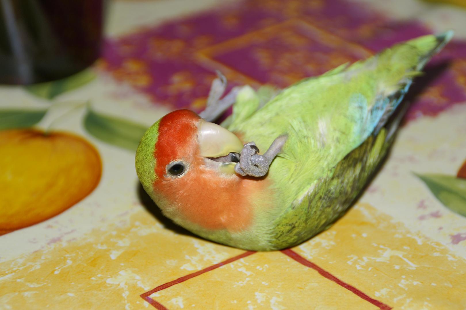 Pitu,y su manicura