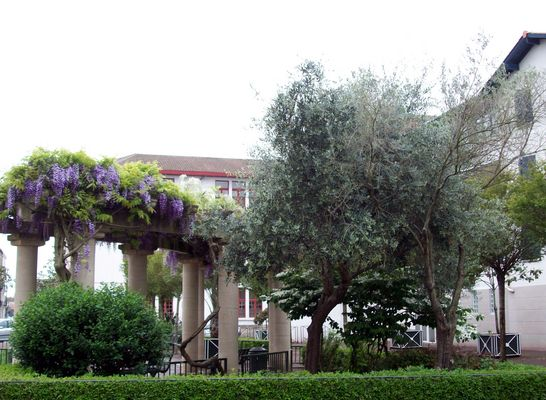 Place d'Albret