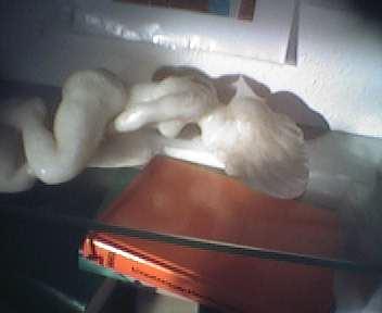 placek erotische tr ume 3 foto bild kunstfotografie. Black Bedroom Furniture Sets. Home Design Ideas