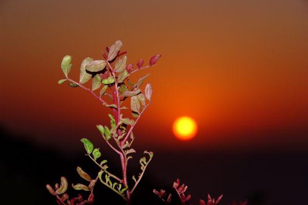 Plänzchen im Sonnenuntergang
