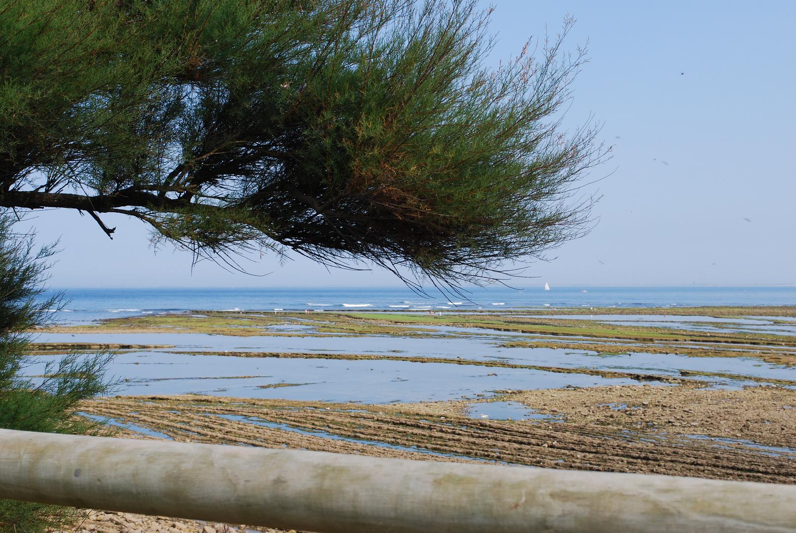 plage abimée