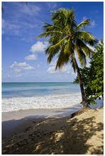 Plage des Salines en Martinique janvier 2012
