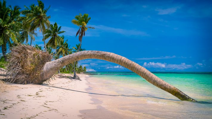 Plam tree fallen in water on a beach at Dominican republic