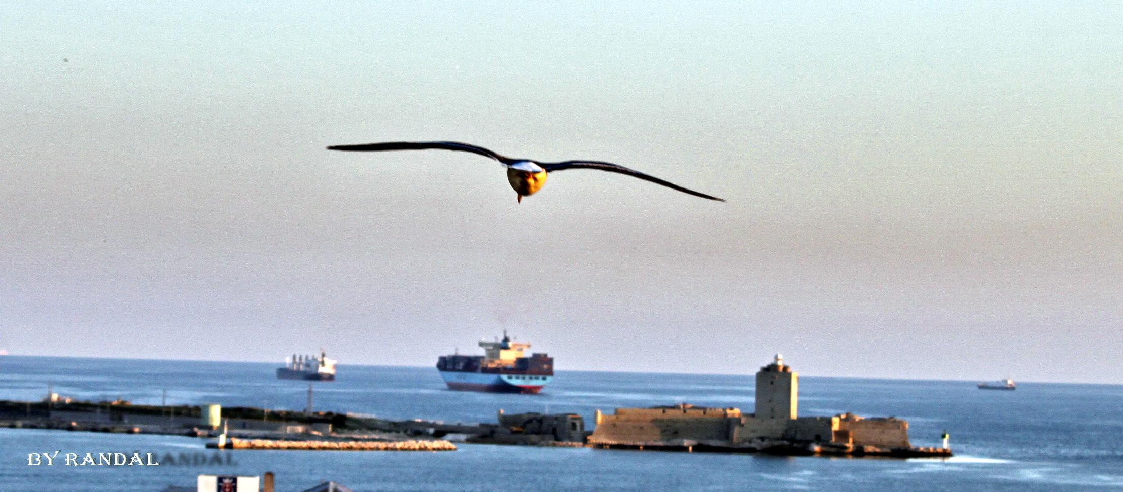 Plane sur le port