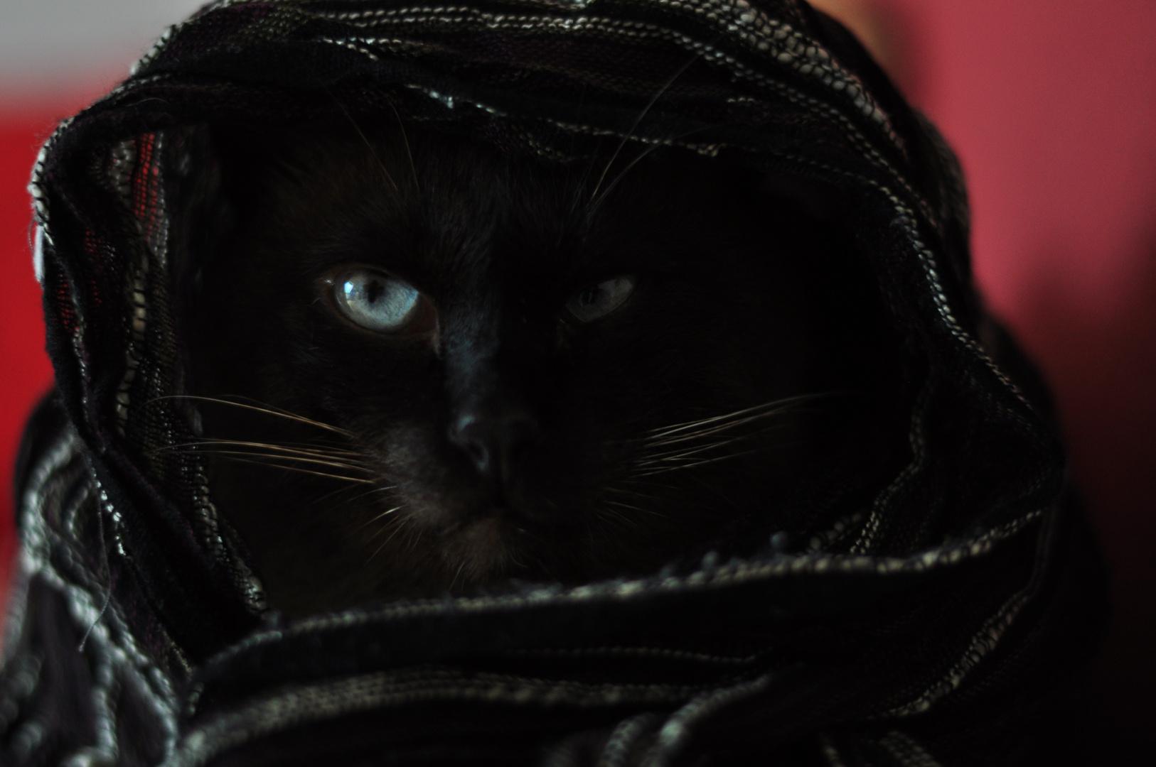 Planet der Katzen