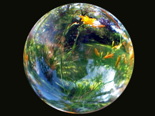 Planet Garten