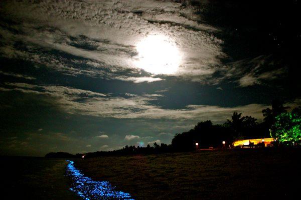 Plankton @ night