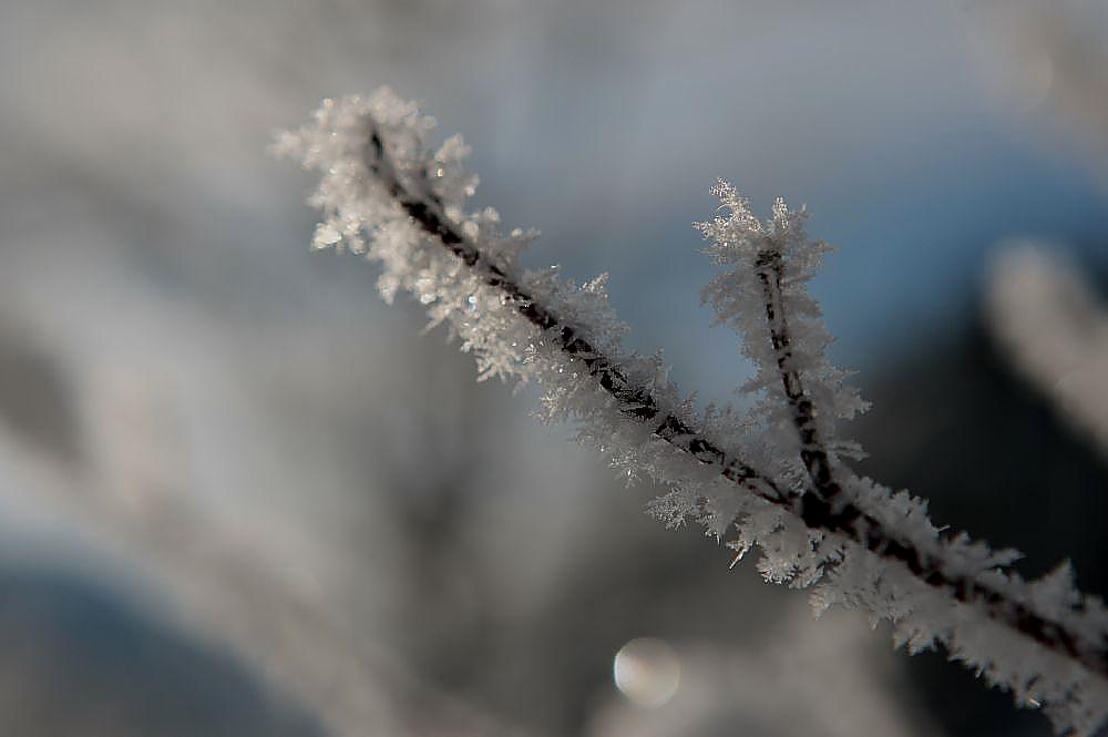 Plansee Winter