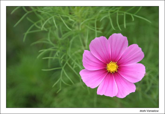 [ plant ]