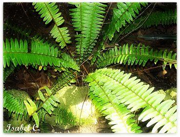 Ferns & Mosses