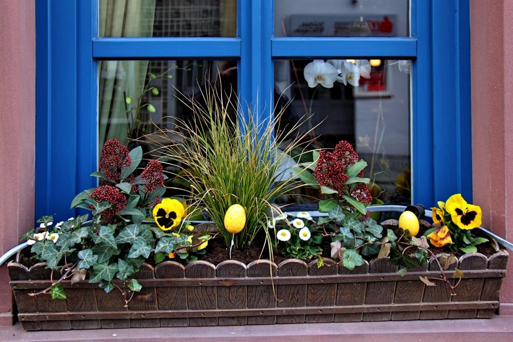 Plantage am Fenster