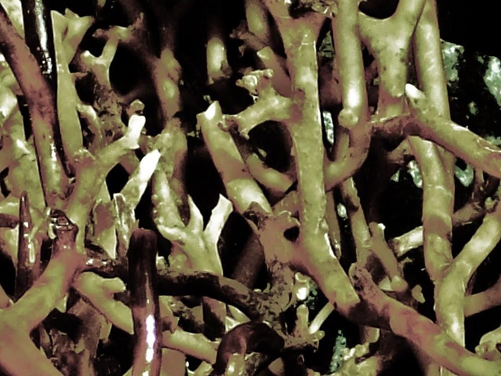 plantas en el mar