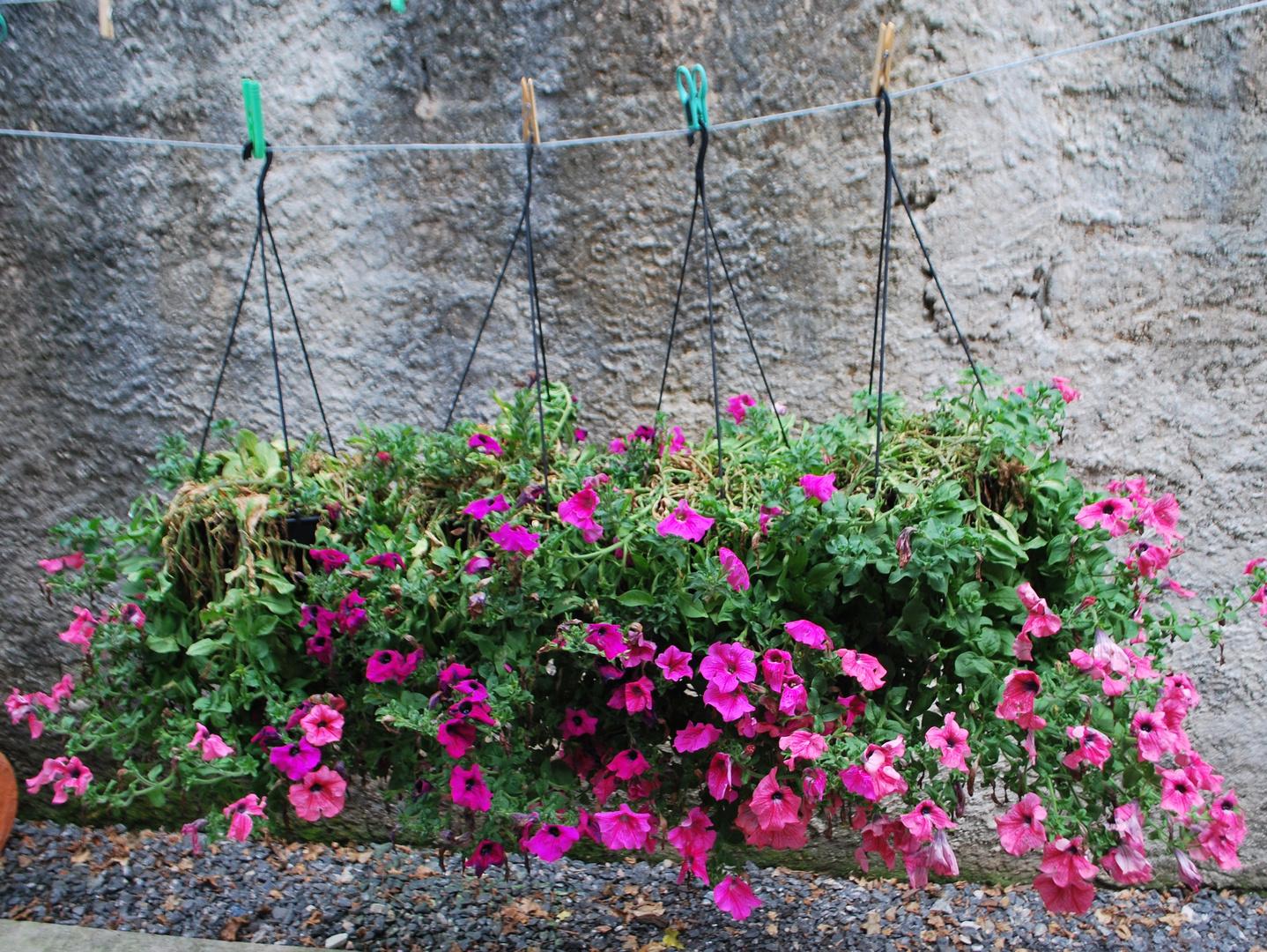 Plantas no varal