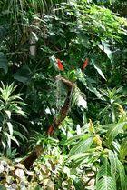 Plantasia II