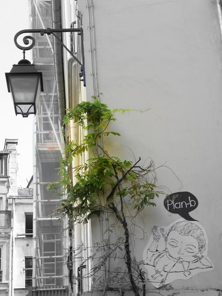 plante au mur