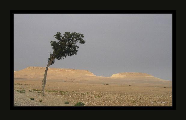 Planté dans le desert.