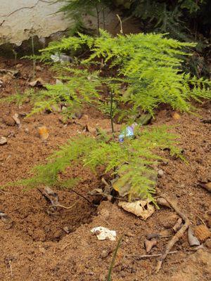 Plante dans mon jardin 2